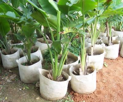 Plastic Plant Nursery Poly Bags