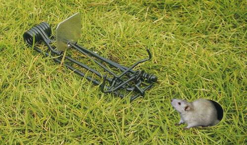 metal gopher trap For Sale