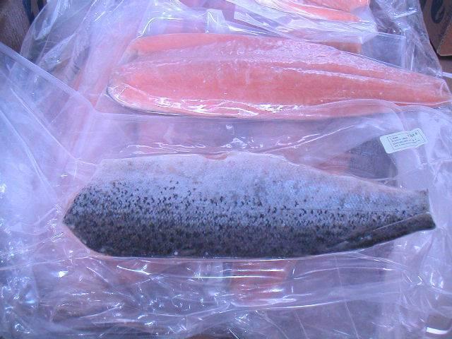 Atlantic Salmon Salar