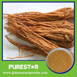 Angelica Extract