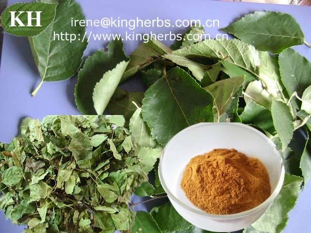 Birch leaf extract,Betula alba extract