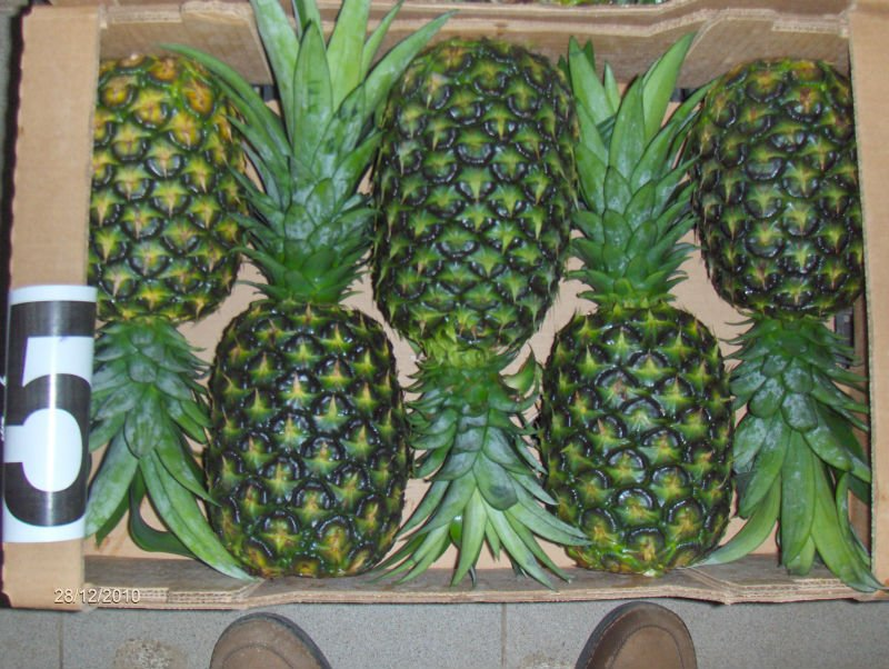 Md2 Pineapples /Fresh Pineapples / Fresh Golden Md2 Pineapples