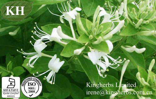 Honeysuckle Flower Extract; 5:1;7:1;10:1; Chlorogenic acids 20% -98% By HPLC