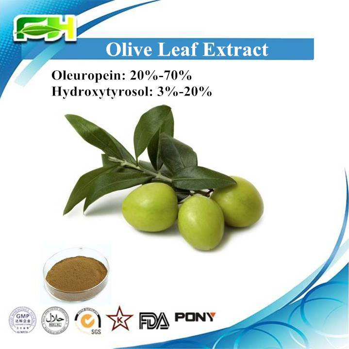 Natural Antioxidant Olive Leaves Extract Oleuropein and Hydroxytyrosol