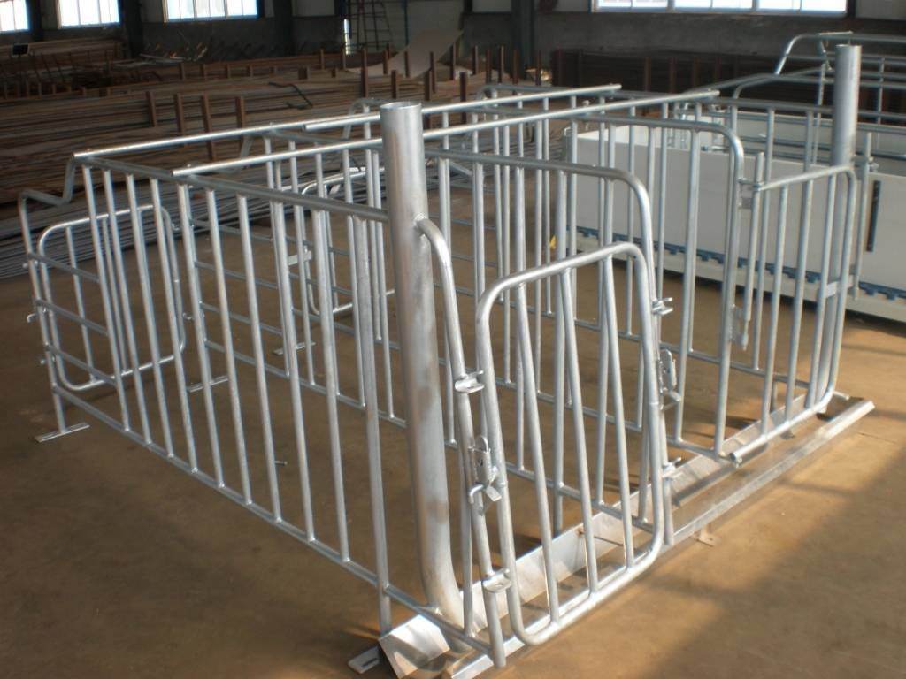 Gestation stall for pig with feed drop tube