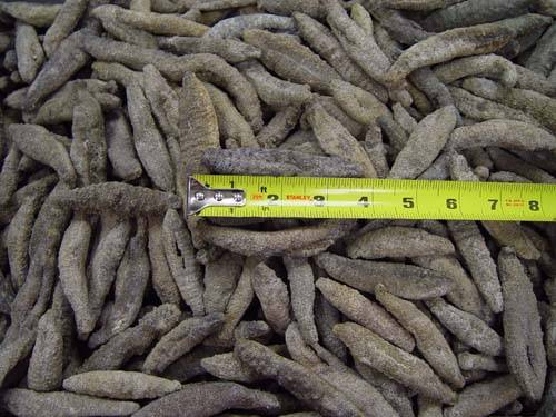 Dried Sea Cucumber (Holothuria Floridana)