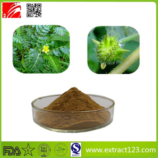 High Quality Tribulus Terrestris Extract Powder