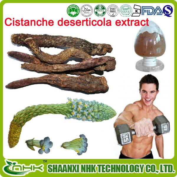 natural and pure high quality cistanche deserticola extract 10:1