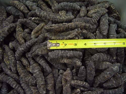 Dried Sea Cucumber (Donkey Dung)