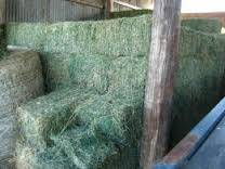 High Quality Alfalfa Hay for Animal Feed