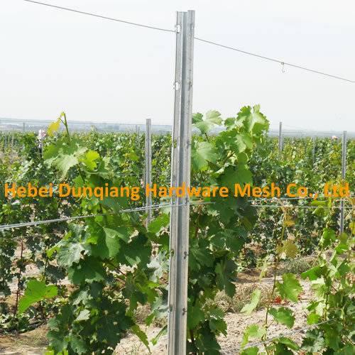 275g/M2 Zinc Coating Galvanized Metal Vineyard Grape Trellis Post