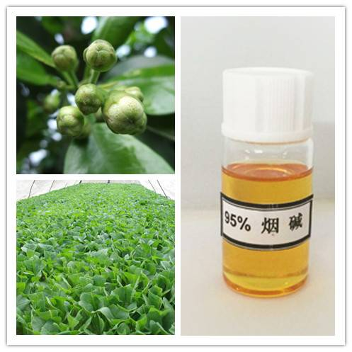 High Purity 95% Nicotine for Intermedite of Pesticide
