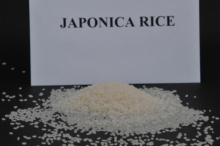 Best Quality Japonica Rice 5% Broken