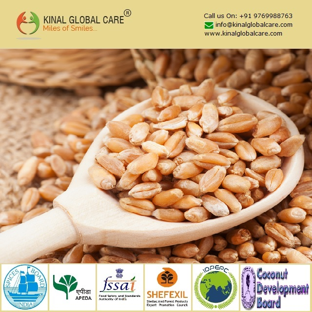 Best Quality Indian Wheat