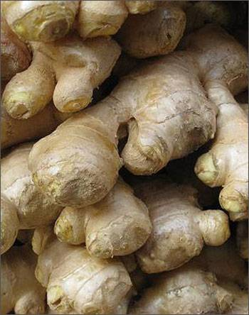 BEST PRICE FOR FRESH GINGER WITH GOOD QUALITY