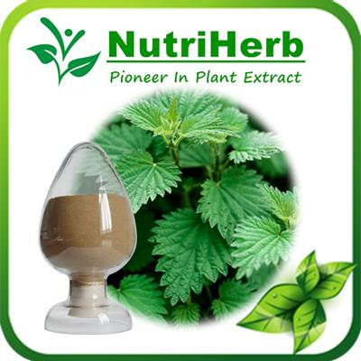 Natural Stinging nettle Extract