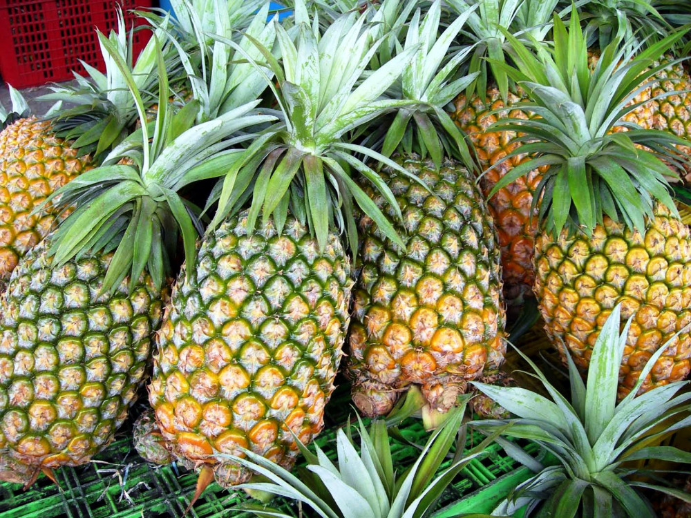 Hot selling Pineapples