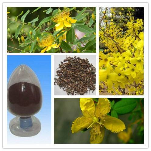 100% pure Natural Hypericins 0.3% Hypericum Perforatum Extract/St.John's Wort extract
