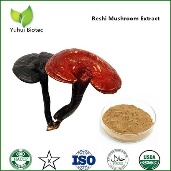 ganoderma extract,ganoderma extract,reishi mushroom extract,reishi extract,lingzhi extract