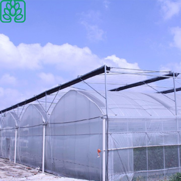Clear Film Low Cost Multi-Span Tunnel Greenhouse for Sale