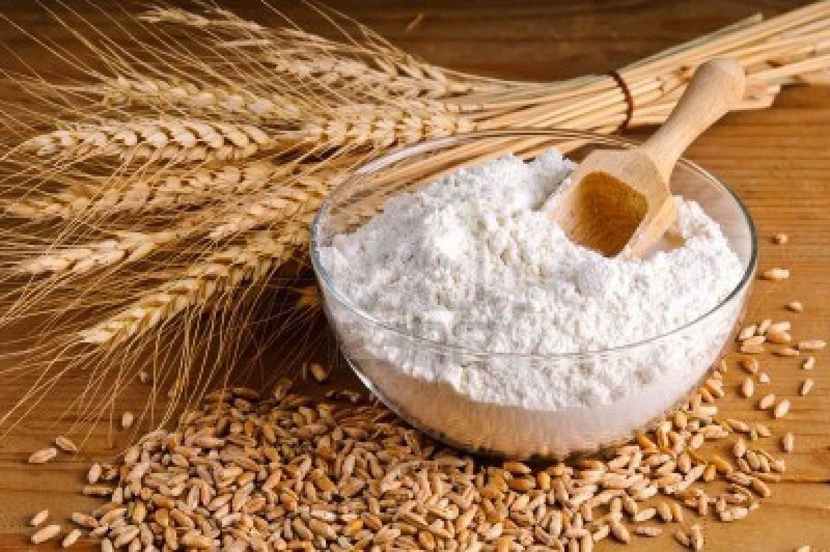 high protein Food Grade vital Wheat Gluten free flour,fish meal ,wheat grain