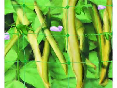 Green vegetable legume support net /white agriculture net