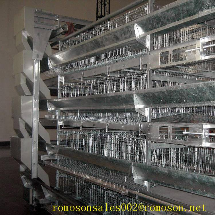 poultry system_shandong tobetter sophisticated products