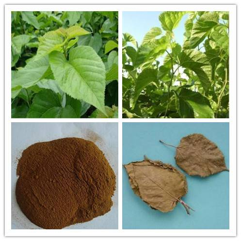 Mulberry Leaf Extract