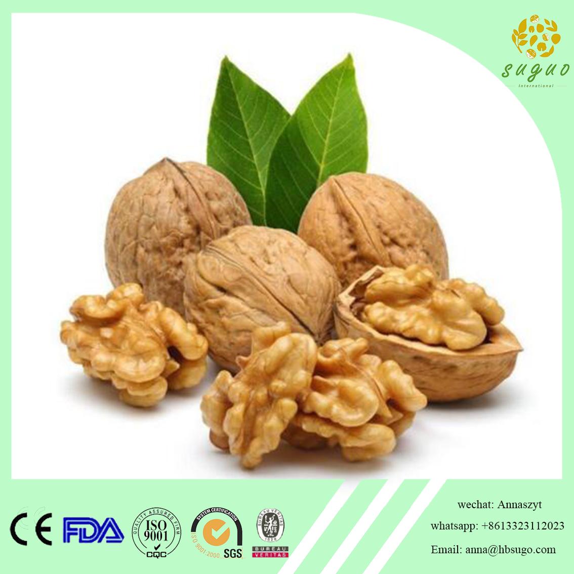 2017 crop hot sales walnut kernel