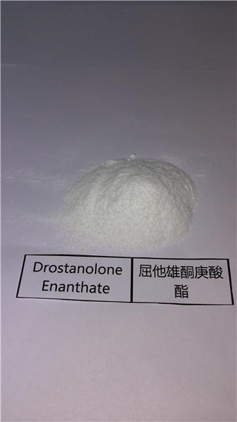 Anabolic Steroid Powder Drostanolone Enanthate CAS: 521-12-0