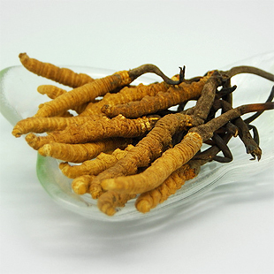 Factory Supply Natural Cordyceps Sinensis Extract