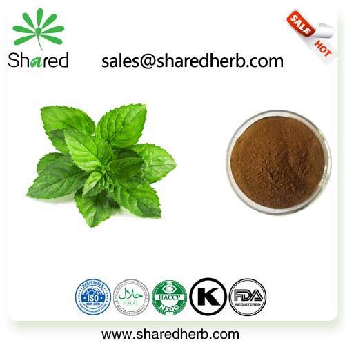Wild Mint Herb Extract