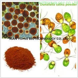 Dunaliella salina powder,Dunaliella powder,Dunaliella salina extract, Dunaliella extract