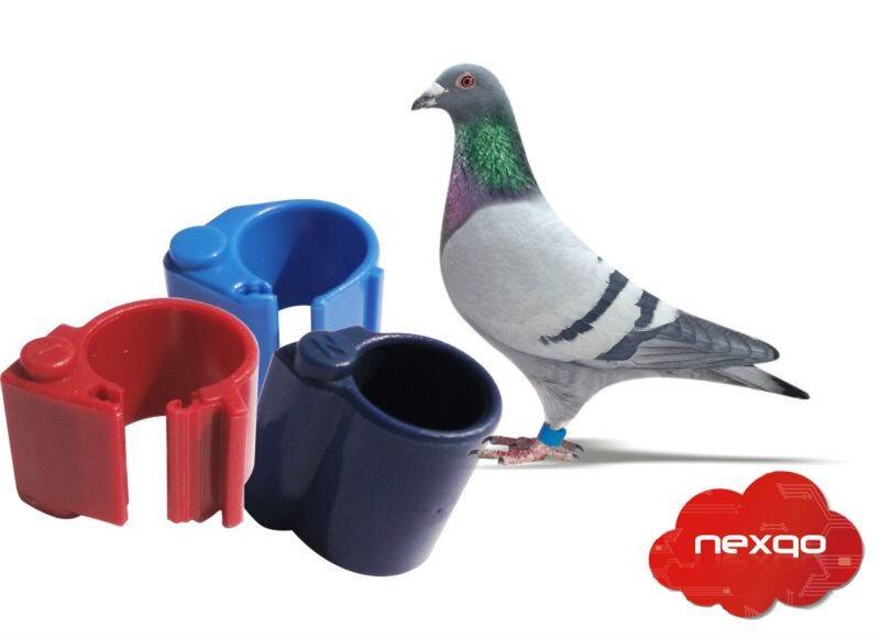 RFID pigeon tag for animal management