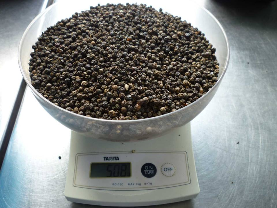 BLACK PEPPER( FAQ) 500 G/L; 550 G/L; 580 G/L\ 0084904624886