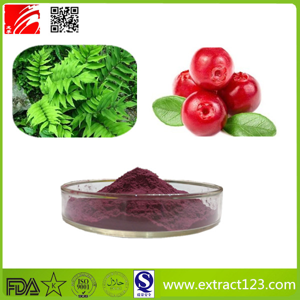High Quality Cranberry Extract