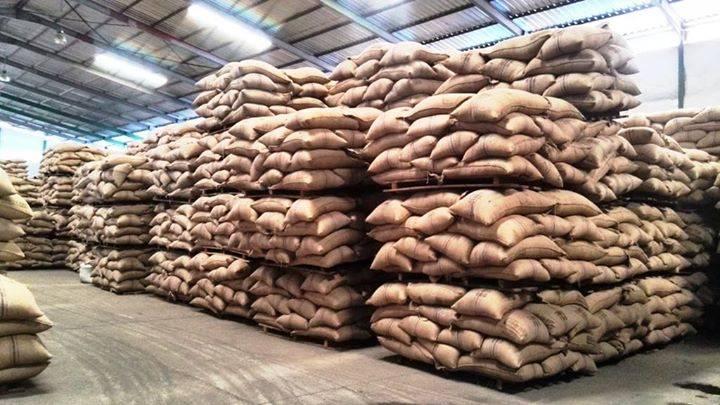Robusta Coffee Beans