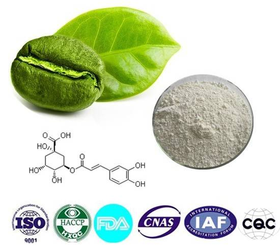 Chlorogenic acid  Cas number:327-97-9 98% HPLC 1kg / bag