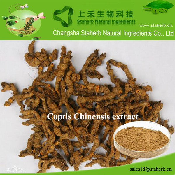 Berberine Hydrochloride 98% of Coptis Chinensis Franch Extract