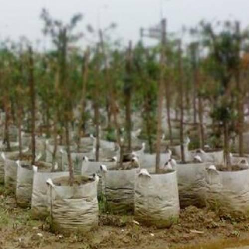 Planting bags - nursery bags - geotextile