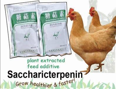 feed additive for chicken  plant extract
