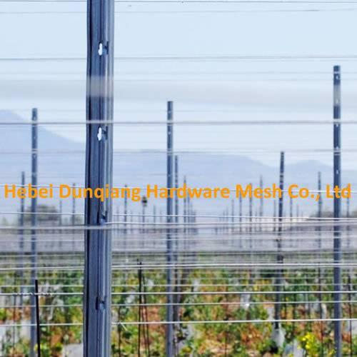 Fruit Garden Metal Grape Pole Stakes