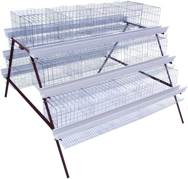chicken egg layer cages