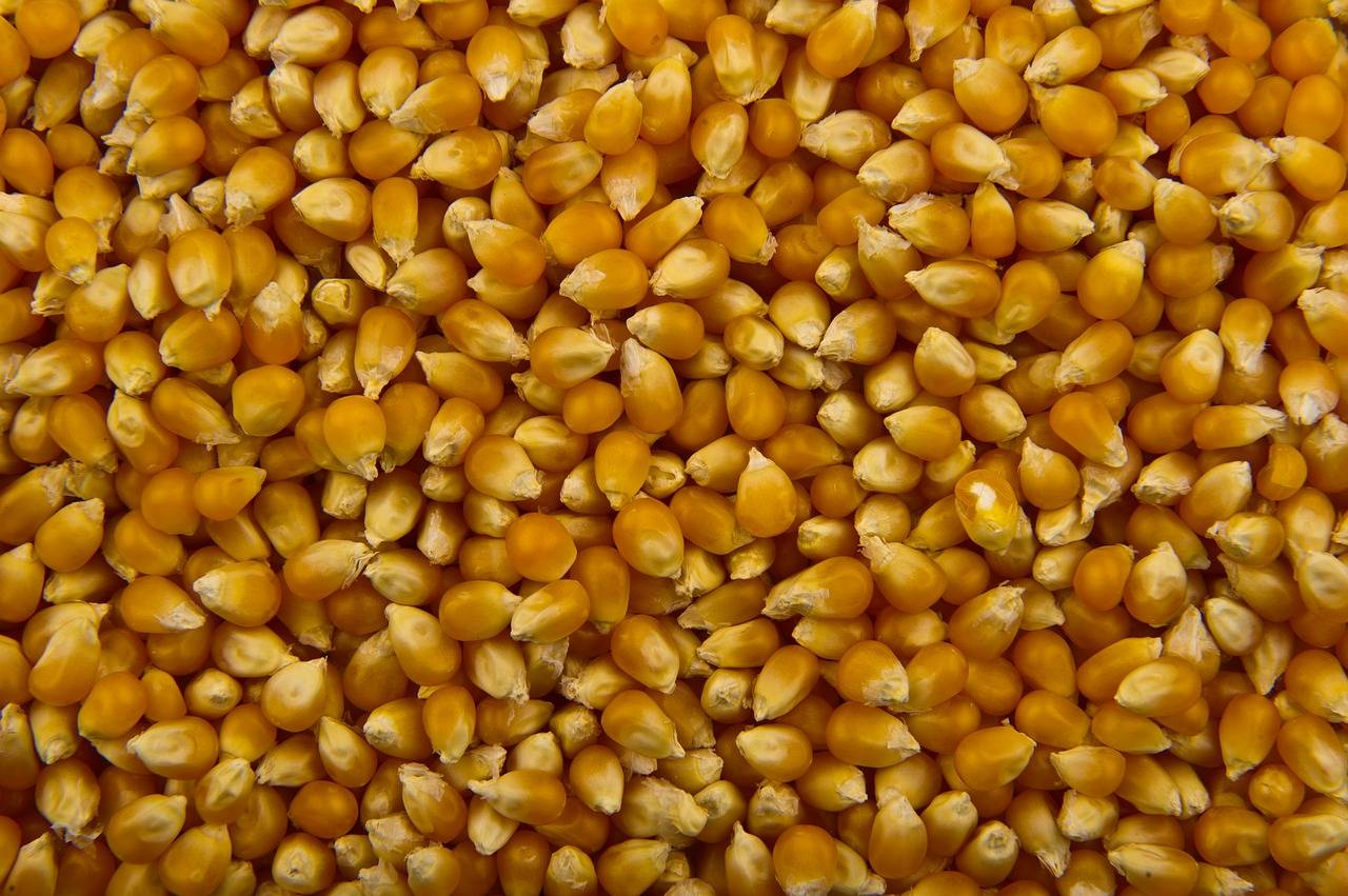 Corn from Russia