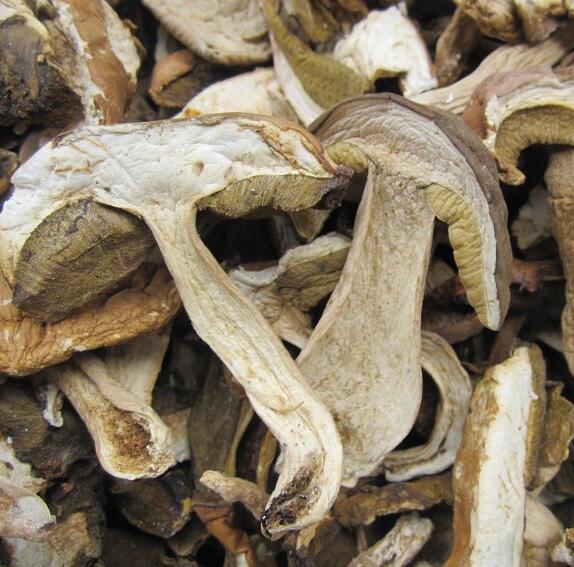 Dried Mushroom Fungus Boletus Edulis Sliced