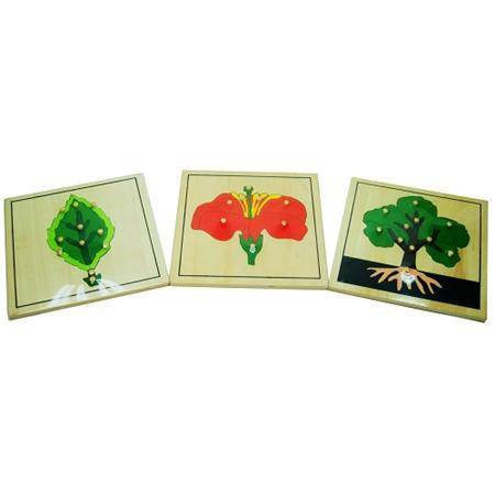 Montessori Botany Puzzles