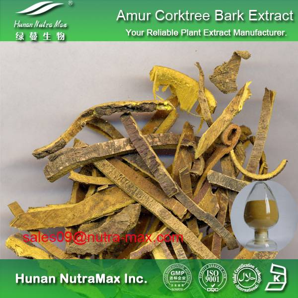 Amur Corktree Bark Extract