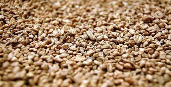 Olive Kernels for Biofuel / Olive Kernals / Biomass olive for fuel (olive kernels)- renewable energy