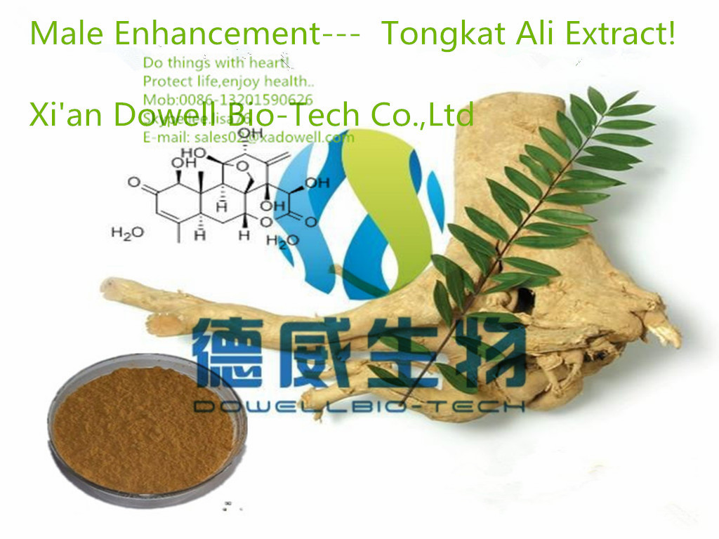 Sex Enhancement Product Tongkat Ali Extract