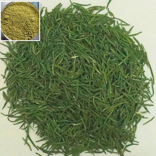 Top quality herbal product additive green tea extract powder